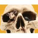 Crâne avec Mouche et Souris Crânes Déco Squelette Gothique Macabre