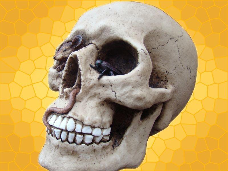 cr ne avec mouche et souris cr nes d co squelette gothique macabre anticae. Black Bedroom Furniture Sets. Home Design Ideas
